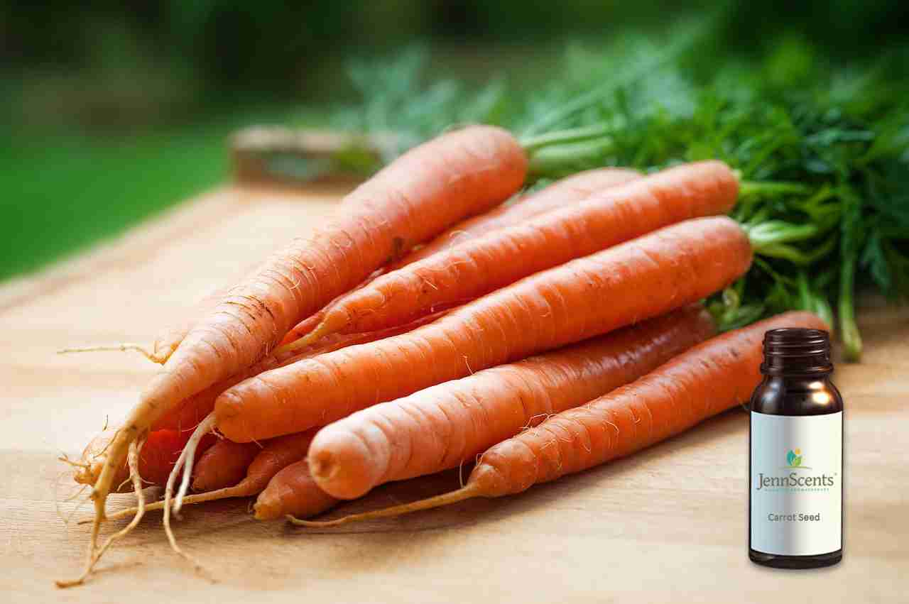 Carrot Seed Essential Oil: Perks of Its Personality & Characteristics